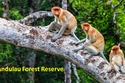 Andulau Forest Reserve
