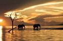 زمبابوي شهدت عدة تطورات مذهلة