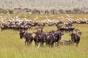 السياحة في تنزانيا   حديقة سيرينجيتي الوطنية