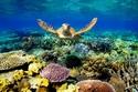الحاجز المرجاني العظيم- أستراليا