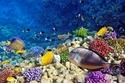 البحر الأحمر- مصر