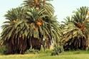 أجمل مزارع التمور في نجران