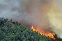 الحرائق تلتهم مساحات خضراء واسعة