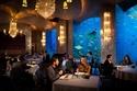 بالصور .. أغرب 7 مطاعم حول العالم!