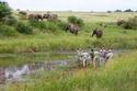 حديقة كروجر الوطنية  جنوب أفريقيا