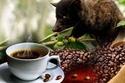 أغلى قهوة في العالم