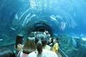 السياحة في بوكيت اوكواريوم
