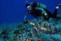 السياحة في غوامالحياة البحرية