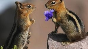 في الوقت المناسب: مصور يوثق لحظات طريفة في حياة الحيوانات البرية