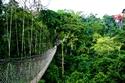 السياحة في رواندا   منتزة nyungwe forest