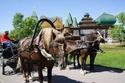 التمتع بجولة رائعة على عربة تجرها الخيول الروسية