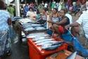 أكشاك الأسماك في جزر سليمان