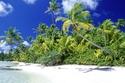 أشجار النخيل على شاطئ جزر سليمان