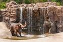 السياحة في لوس أنجلوس- حديقة حيوان لوس انجلوس