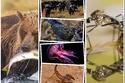 من البعوضة إلى الفيل: أخطر 10 حيوانات في العالم