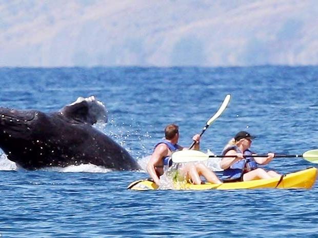 انت في قارب صغير بالقرب من الدولفين تشاهد العروض الرائعة عن قرب