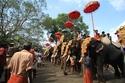 Thrissur  و استعراض تقليدي للفيلة الهندية