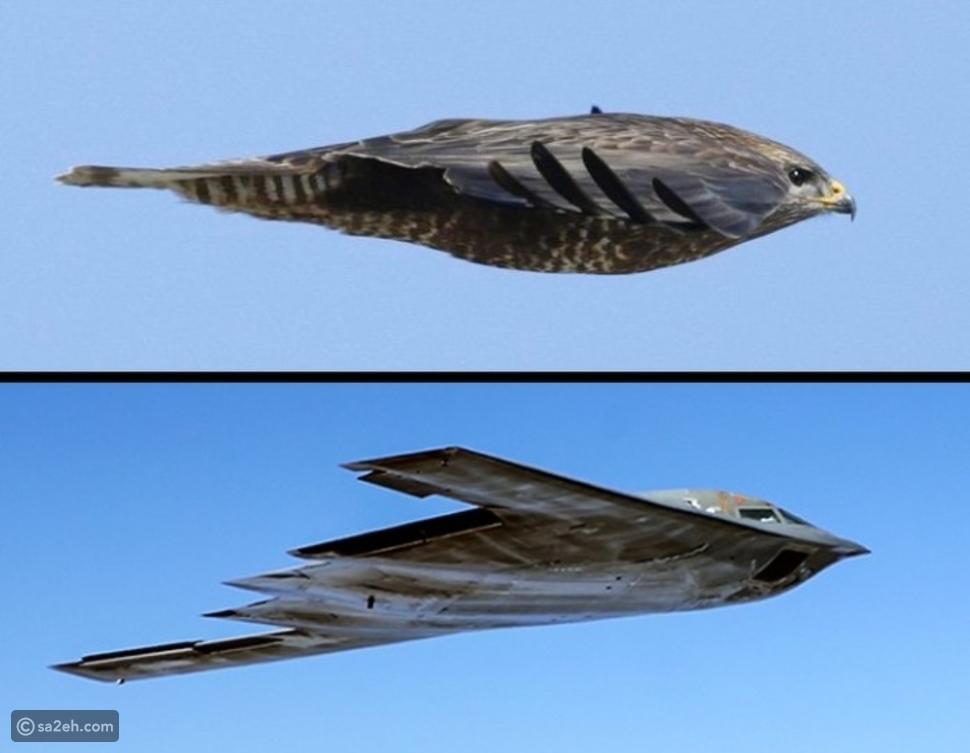 بإمكانها التحليق دون محركات: حقائق مثيرة عن الطائرات