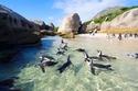 السياحة في كيب تاون شاطئ بولدرز