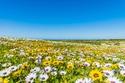السياحة في كيب تاون بالأزهار