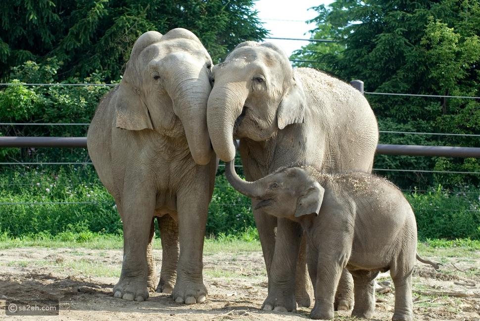 أفضل عشر حدائق حيوان في العالم