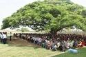 قيمة شجرة واحدة