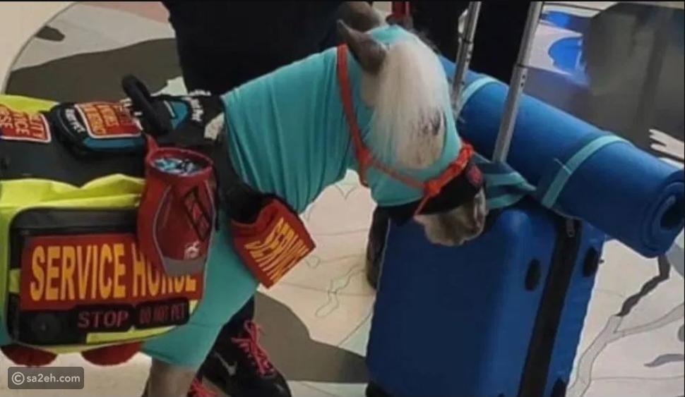 صور: أمريكية تحجز لحصانها مقعداً بالدرجة الأولى على الطائرة