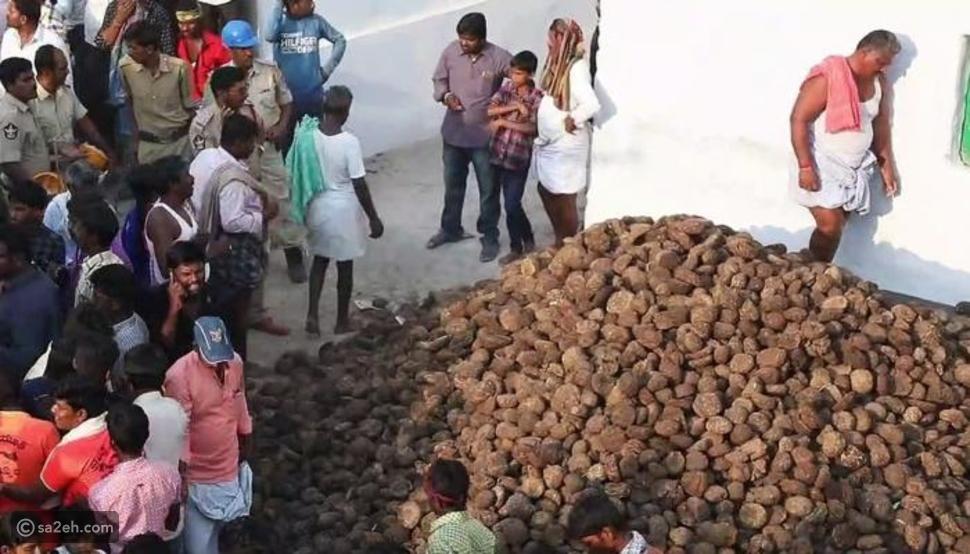 الهنود يجمعون روث الأبقار قبل بدء الاحتفال بعيد جوريهابا