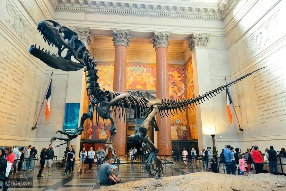 أفضل 6 متاحف للتاريخ الطبيعي في العالم