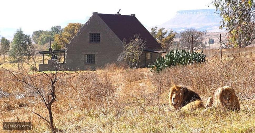ليون هاوس في جنوب أفريقيا
