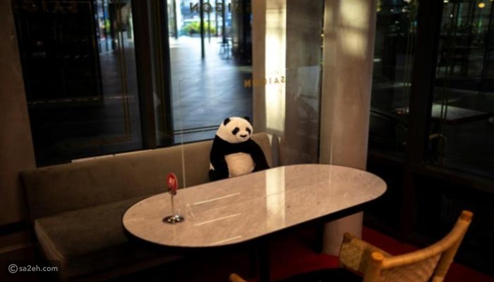 الباندا رفيقة وحدتك إذا قررت تناول الطعام في هذا المطعم التايلاندي