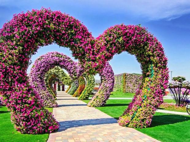 أزهار دبي مراكل لاند
