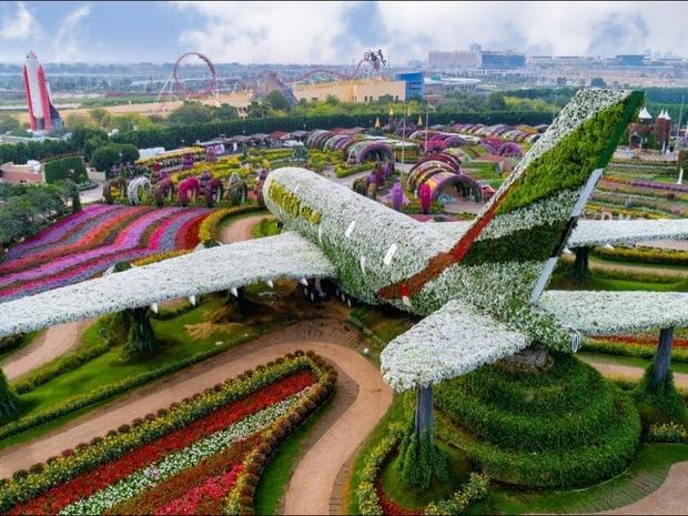 طائرة من الزهور