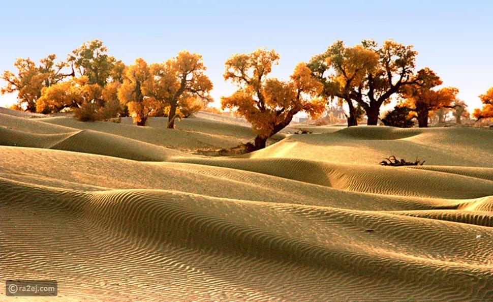 الصحاري الإحدى عشر الأكثر سحراً في العالم 🌍🌴