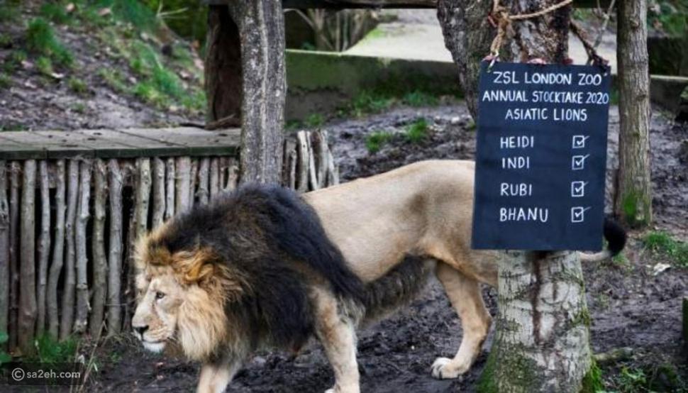 لأول مرة  منذ الحرب العالمية: أقدم حديقة حيوان في العالم تغلق أبوابها
