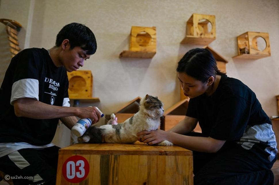 احتسي القهوة بصحبة القطط في هذا المقهى الفيتنامي الفريد