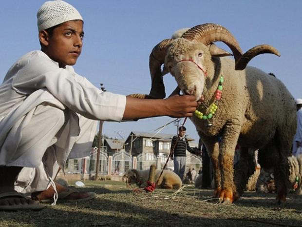 مشاهد ذبح خروف العيد بعد صلاة العيد