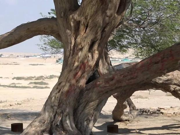 شجرة الحياة 3