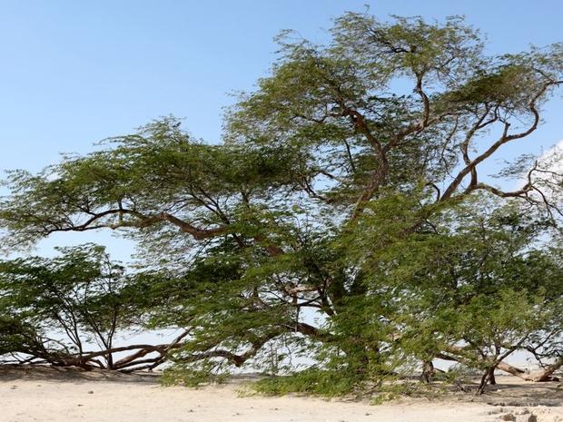 شجرة الحياة 5