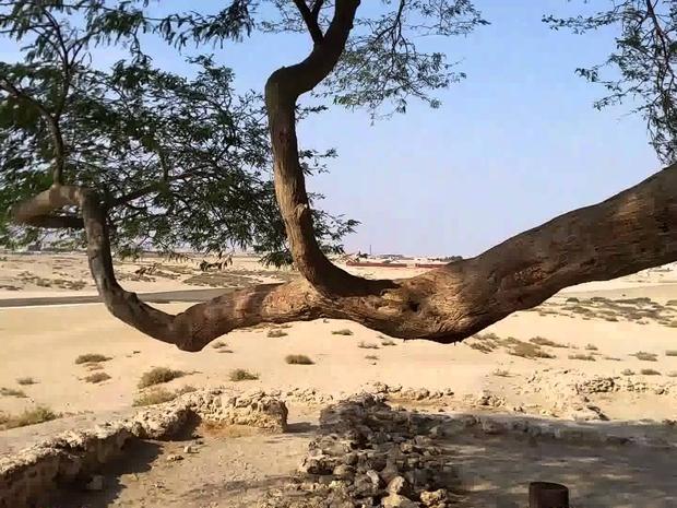 شجرة الحياة 1