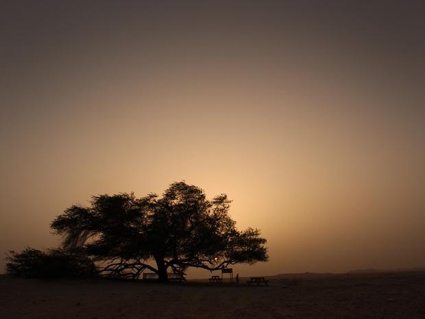 شجرة الحياة 2