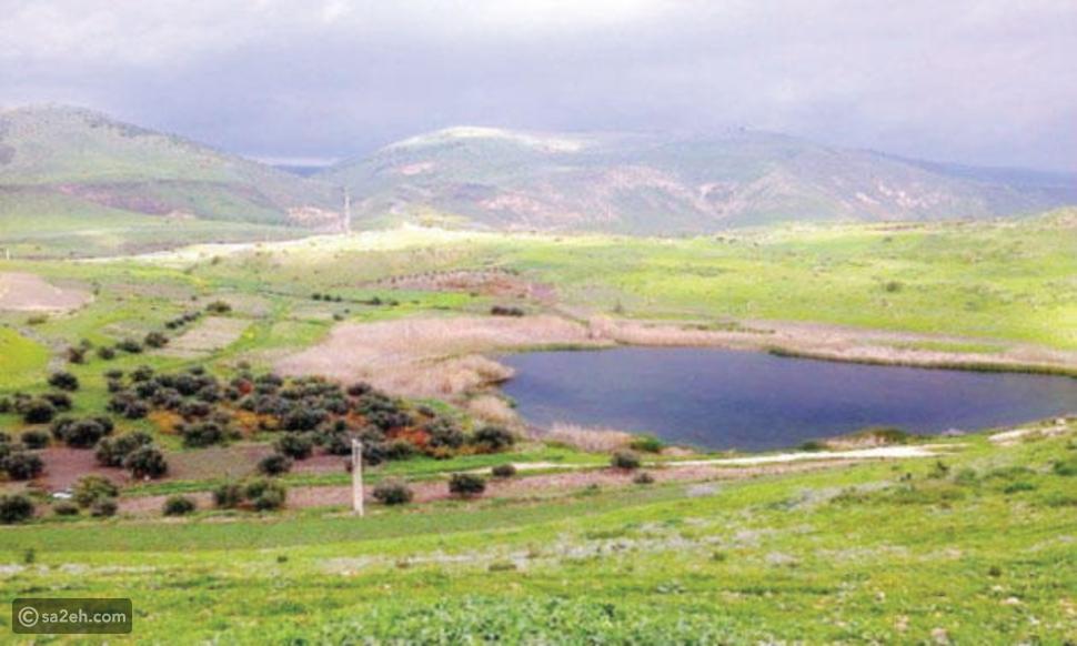 بركة العرائس أجمل بِرك الأردن وموقع سياحي يحتوي حيوانات وطيور نادرة