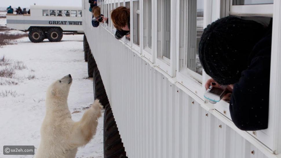 تجربة مثيرة بين الثلوج والدببة القطبية يوفرها لك هذا الفندق الفريد