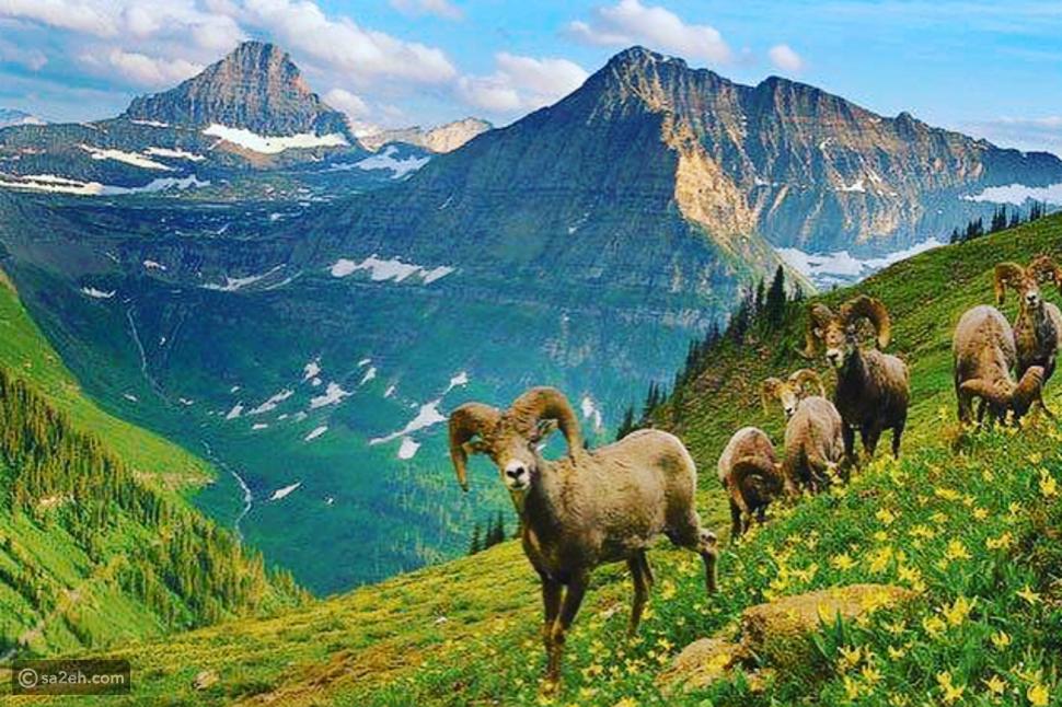 المحميات الطبيعية في العالم
