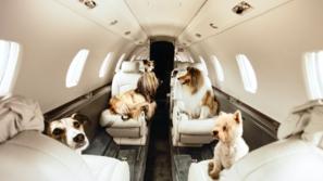 السفر مع الحيوانات الأليفة.. انتبه لهذه الشروط