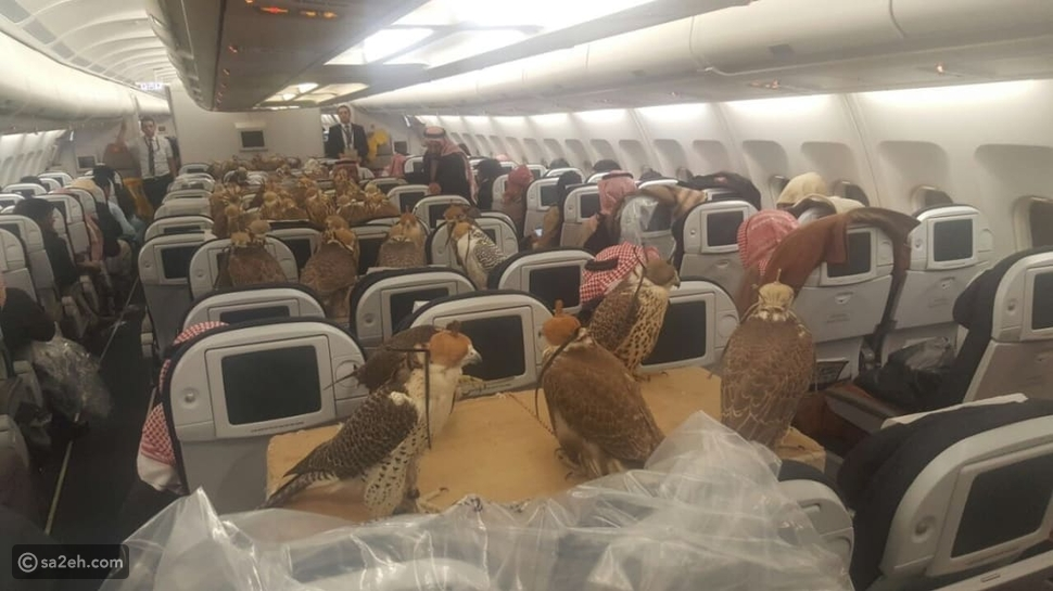 صقور على متن الطائرة: الدرجة الأولى للطيور الجارحة