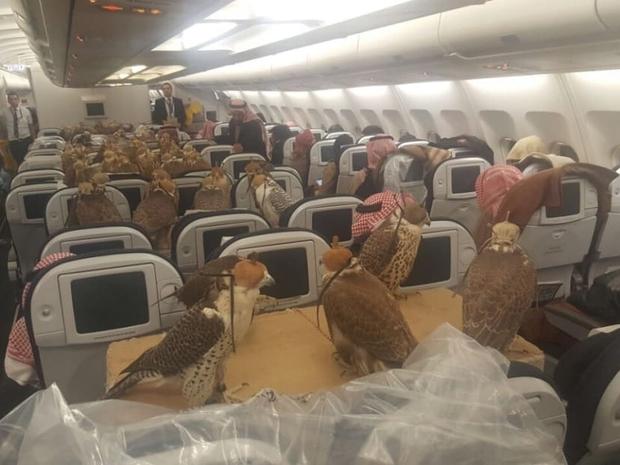 صقور على متن الطائرة: الدرجة الأولى للطيور الجارحة 1