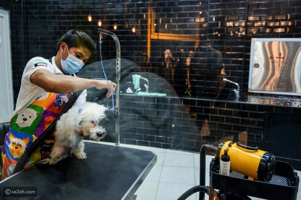 قسم مخصص لتدليل الكلاب في مقهى The parking lot