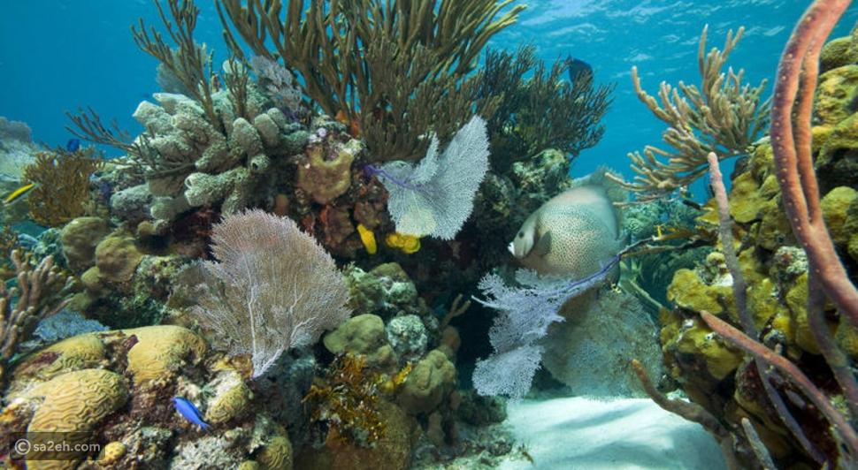 رحلة مجانية إلى جزر البهاما مدتها شهرين لـ5 محظوظين: إليك التفاصيل