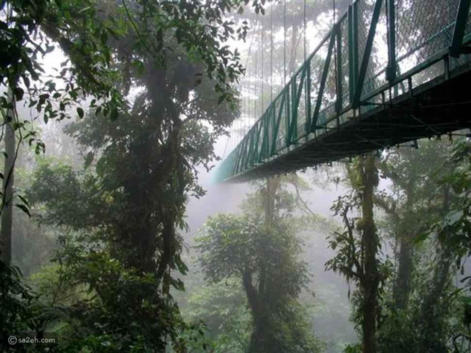 محمية غابة مونتيفيردي كوستاريكا